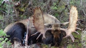 Newfoundland Hunting Outfitters