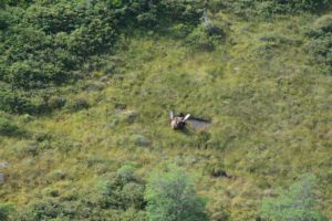 Newfoundland_Moose_Hunting_Ironbound_Outfitters_15091020