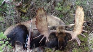 Newfoundland_Moose_Hunting_Ironbound_Outfitters_16102726