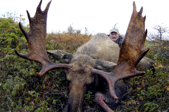 Newfoundland Moose Hunting Outfitters